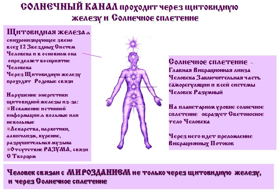 СОЛНЕЧНЫЙ Канал проходит через щитовидную железу и СОЛНЕЧНОЕ Сплетение